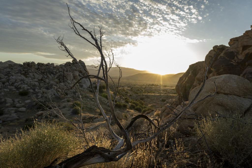 Richard Mille est fier de présenter l'édition 2021 de « Desert X